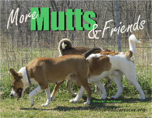 More Mutts 2017