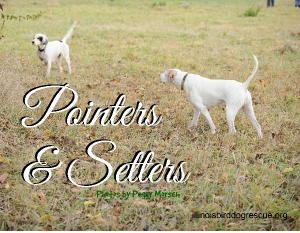 Pointers and Setters