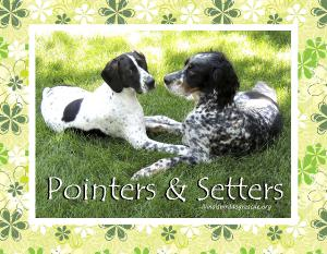 Pointers & Setters 2017