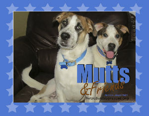 Mutts and Friends