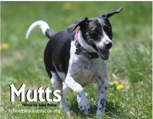 Jenni's Mutts