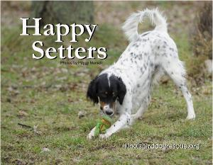 Happy Setters 2017