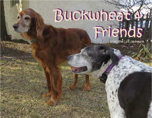 Buckwheat and Friends