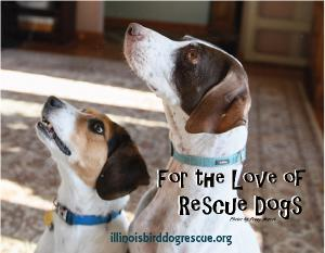 For the Love of Rescue Dogs