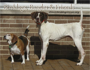 Beagles, Birddogs and Friends