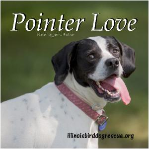 Pointer Love 2018