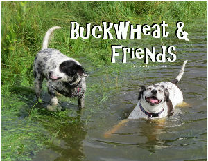 Buckwheat & Friends 2018