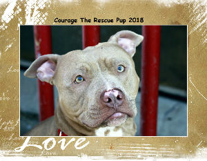 Courage the Rescue Pup for Detroit Pit Crew