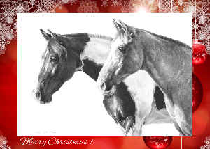 Christmas Card of Ringo & Blue