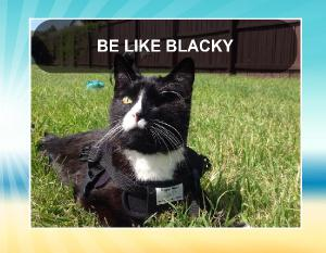 Be Like Blacky