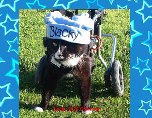 Blacky The Wheelchair Cat 2020 Calendar