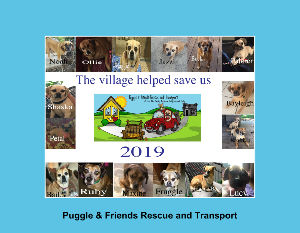 2019 Puggle & Friends Rescue and Transport