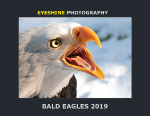 Bald Eagles Calendar 2019