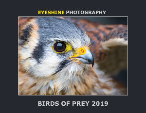 Birds of Prey Calendar 2019
