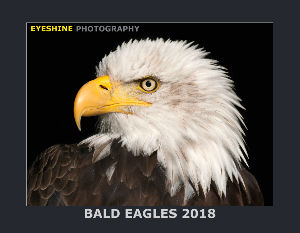 Bald Eagles Calendar 2018