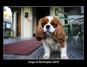Dogs of Burlington 2018
