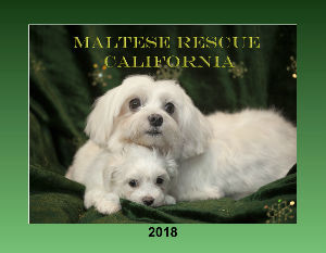 Maltese Rescue California
