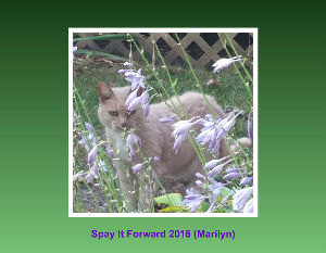 Spay It Forward 2018  Homeless Cat Calendar
