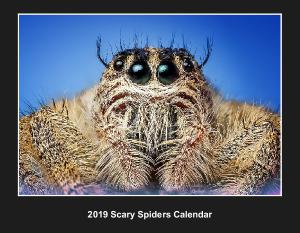 2019 Scary Spiders Calendar