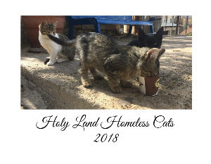 Holy Land Homeless Cats