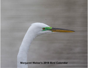 2018 Calendar of Birds by Margaret Weber