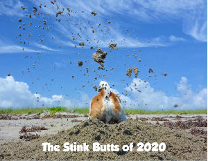 The Stink Butts of 2020