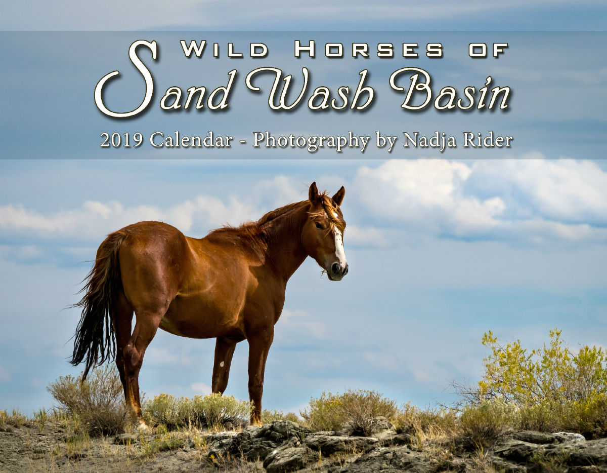 2019 Wild Horses Of Sand Wash Basin Wall Calendar Create