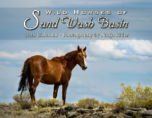 2019 Wild Horses of Sand Wash Basin Wall Calendar