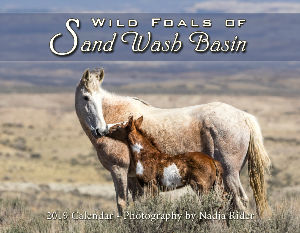 2019 Wild Foals of Sand Wash Basin Wall Calendar