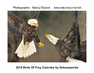2018 Birds of Prey Calendar