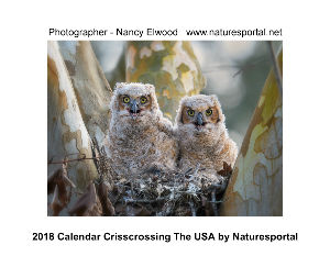 2018 Crisscrossing the USA Calendar