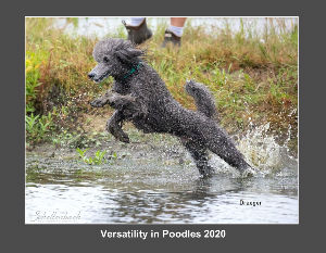 Versatility in Poodles 2020