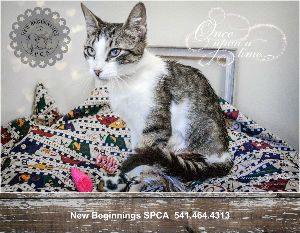 2018 New Beginnings SPCA Calendar
