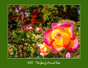 2019 - The Year of Love and Roses