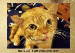 Neuro Dan - Feather Dan Coffee Table Book