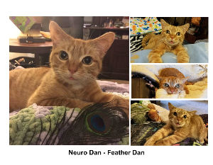 Neuro Dan - Feather Dan 2019 Calendar