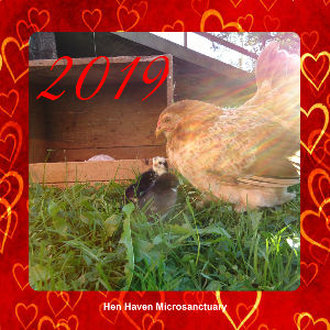 Hen Haven Microsanctuary Calender