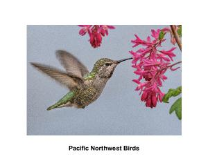 Pacific Northwest Birds