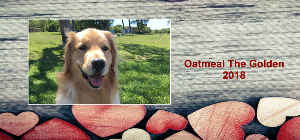 Oatmeal The Golden 2018 Desk Calendar