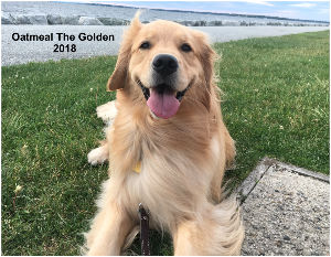 Oatmeal The Golden 2018 Wall Calender