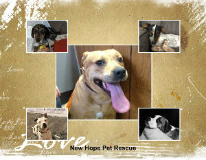 New Hope 2020 Rescue Calendar