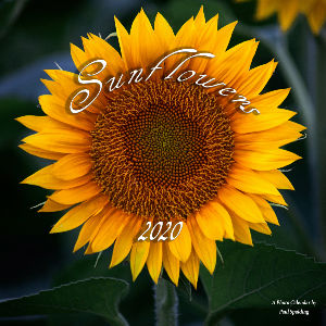 Sunflowers 2020