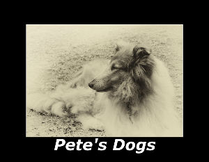DOGS - Beautiful Black and White Images