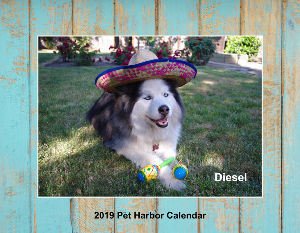 2019 Pet Harbor Calendar Collage