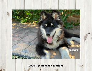 2020 Pet Harbor Calendar Collage Edition