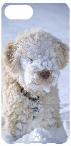 iPhone Case Lagotto Romagnolo Winter