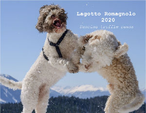 Lagotto Romagnolo 2020 Dancing truffle pawns