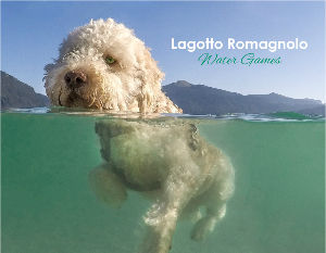 Lagotto Romagnolo Water Games