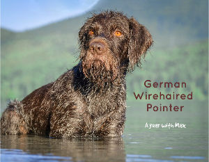 German Wire-haired Pointer - A year with Max