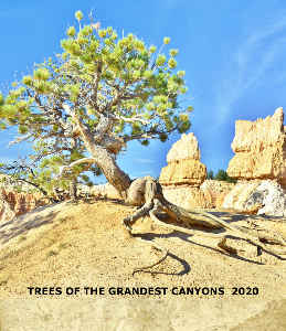 2020  TREES OF THE GRANDEST CANYONS